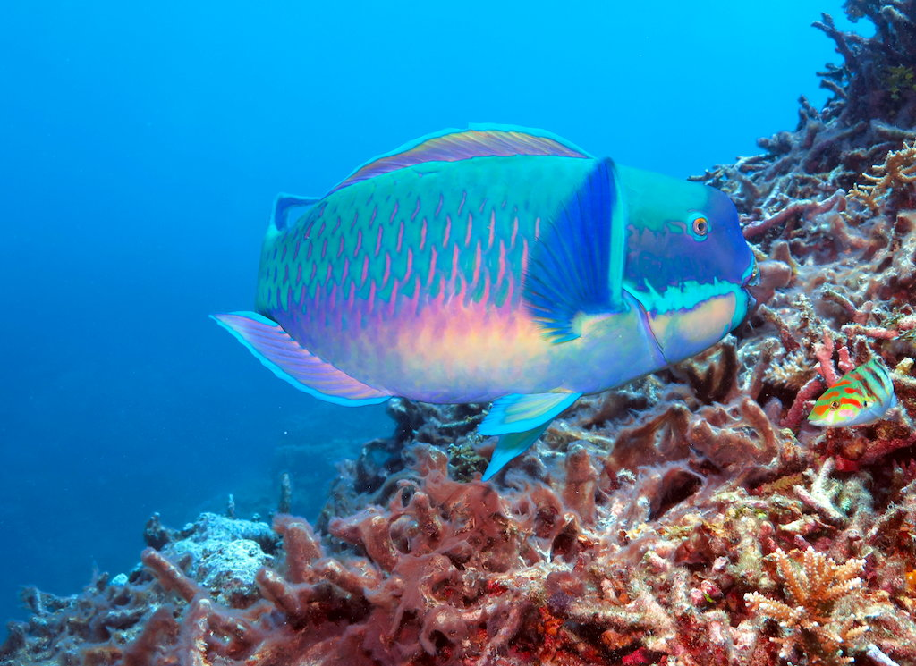 Four of the craziest fish on the Great Barrier Reef