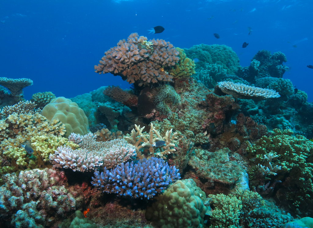 4 reasons that the Great Barrier Reef should be a part of your Down Under bucketlist
