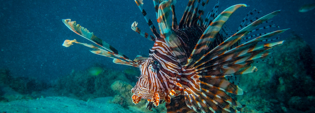 10 awesome reef critters and where to find them