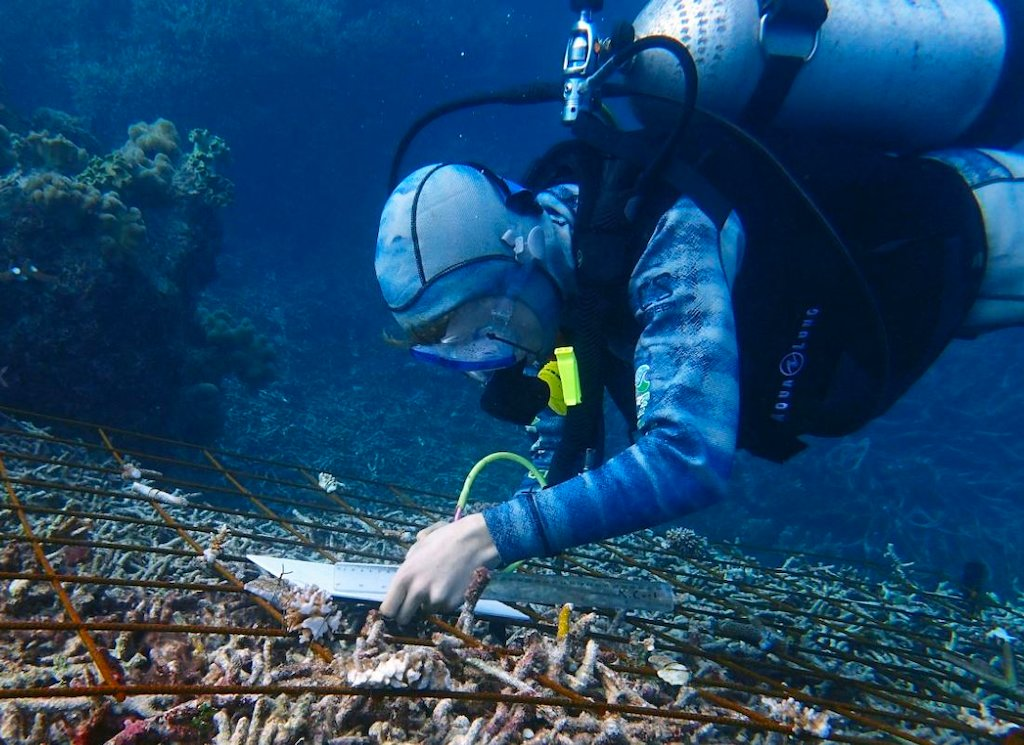 Australian-first coral restoration research project underway at Agincourt Reef!