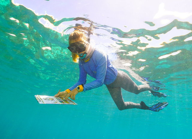 Quicksilver Group Reef Stewardship - Tourism Industry Activation & Reef Protection Initiative